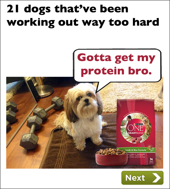Donnie The Dog Purina Ad Workout