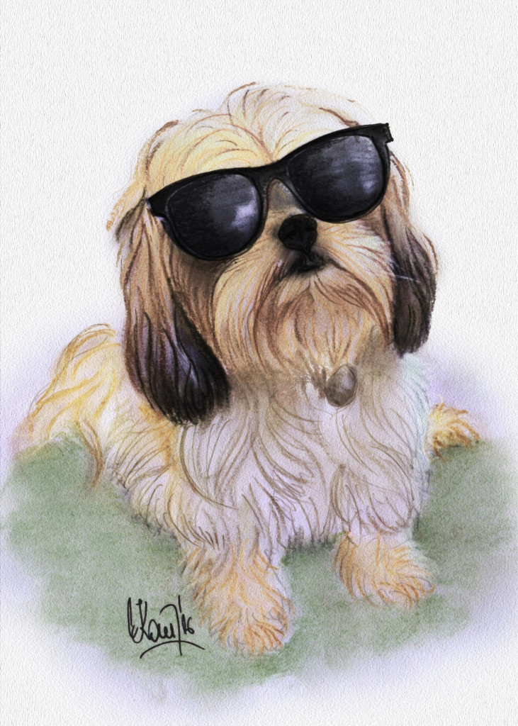 Donnie The Dog With Sunglasses Drawing