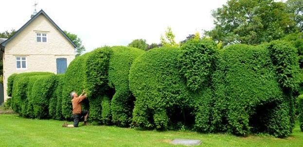 hedging1