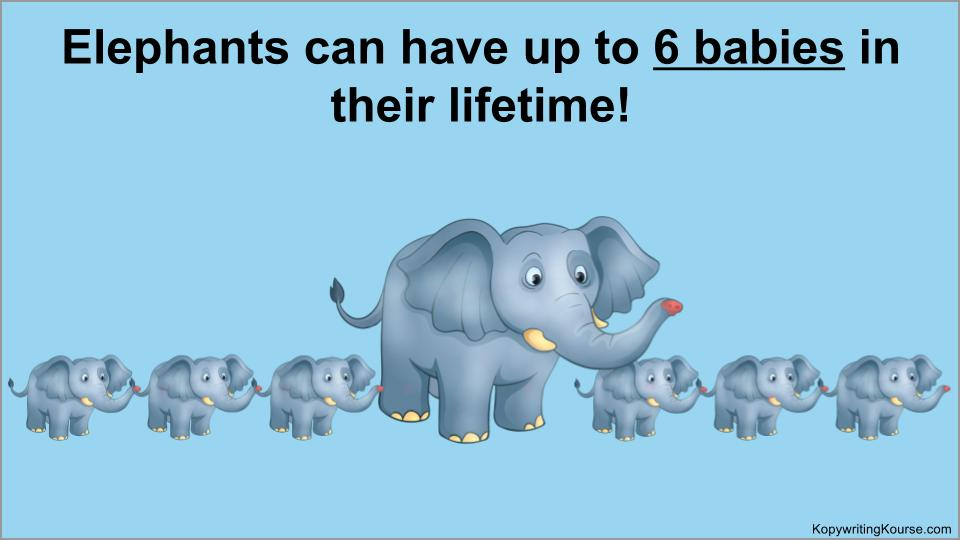 elephants can have up to 6 babies in their lifetime
