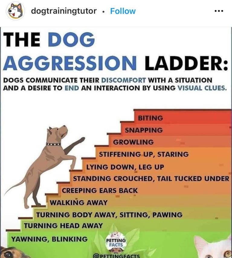 dog aggression ladder
