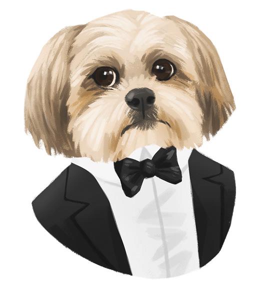 Donnie The Dog Black Tuxedo