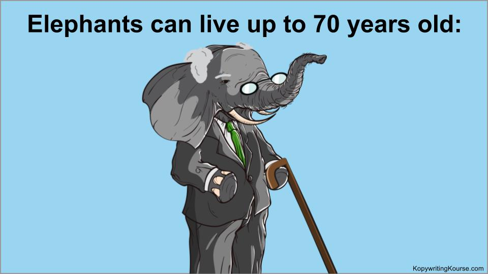 elephants-live-up-to-70-years-old