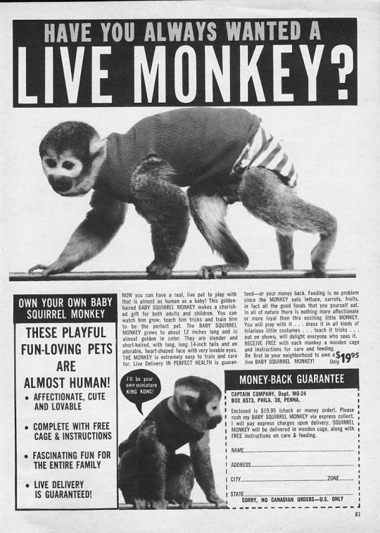 live monkey print ad